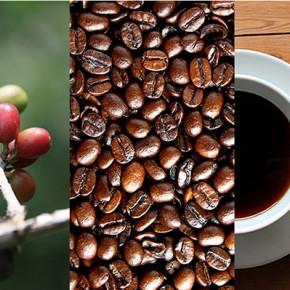 8 популярных источников кофеина: ключевые отличия